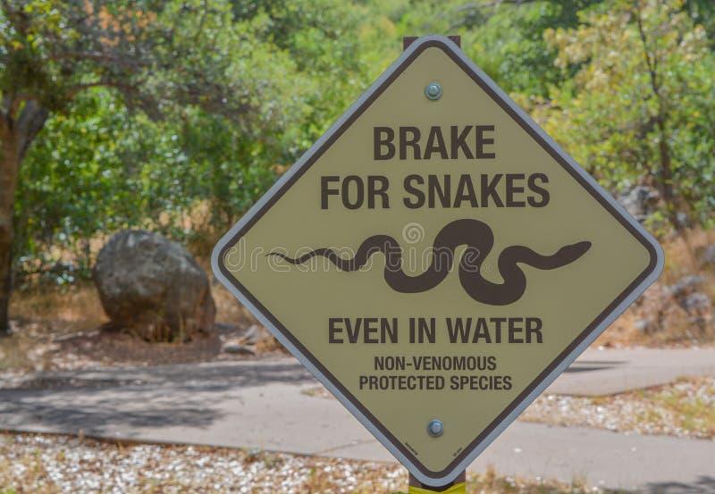 Break For Snakes, nawet w wodzie Zarejestruj się w Oak Creek Canyon, Northern Arizona obraz royalty free