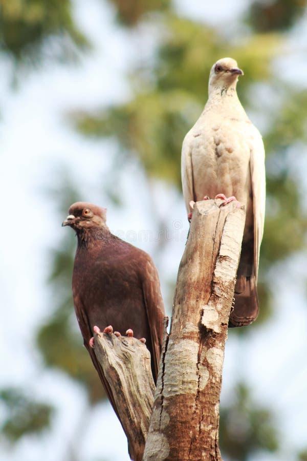 Break up. The photo seems like the pigeons broke up stock image