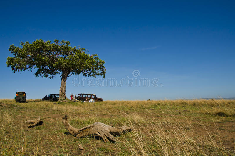 Breakfast In The African Savanna Royalty Free Stock Photography