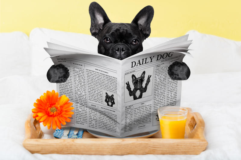 Breakfast in bed. Having breakfast in bed and reading the morning news royalty free stock image