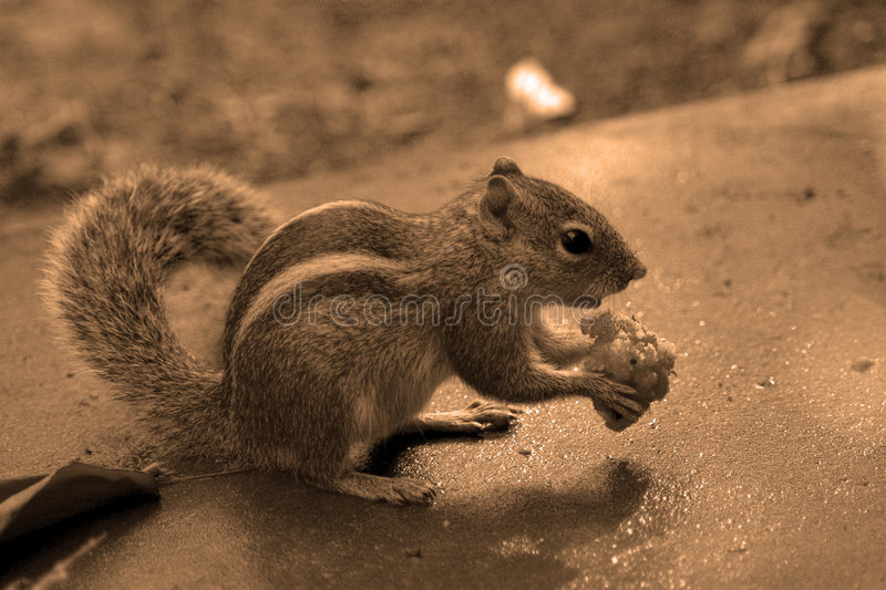 Download Breakfast feast stock image. Image of squirrel, lonely, amount - 91899