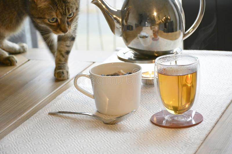 Breakfast, tea and a curious cat stock photography