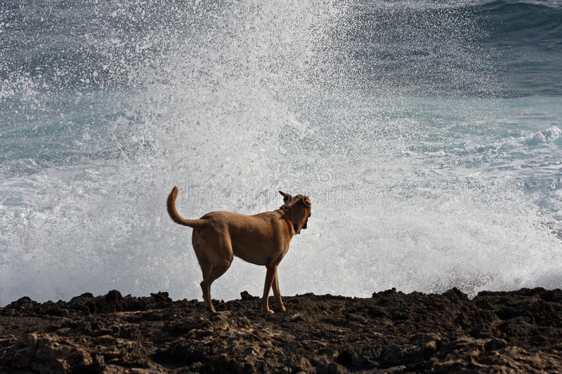 Download Breaking waves stock image. Image of waves, dogs, shore - 24288945