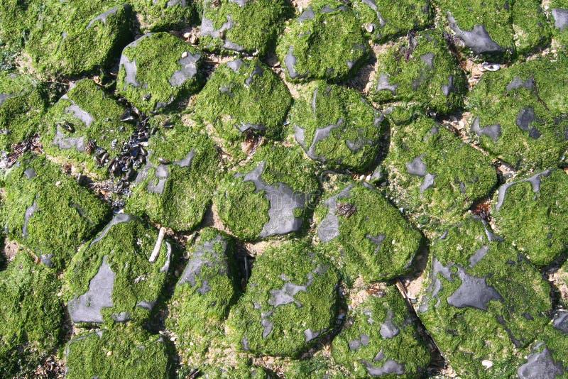 Breakwater Stones Stock Photos