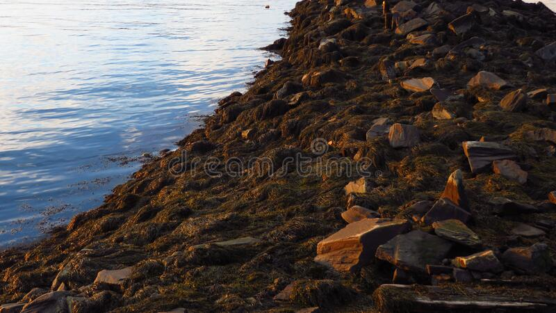 Breakwater at Sunset royalty free stock image