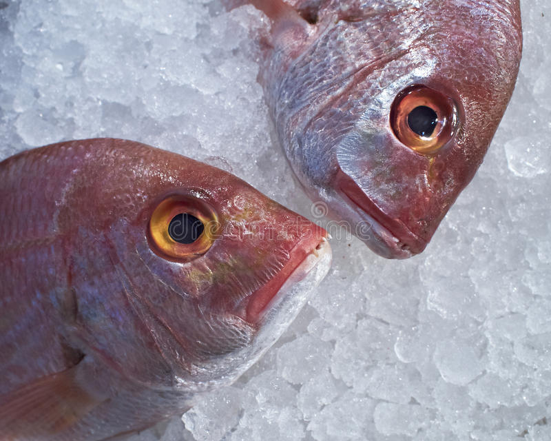 bream το ψάρι διευθύνει τη Ερ&upsilo στοκ εικόνες