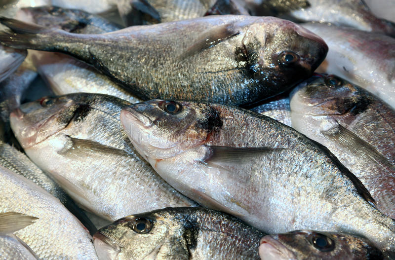 Bream caught fresh in the Mediterranean Sea. Big bream caught fresh in the Mediterranean Sea on sale in fish market royalty free stock images