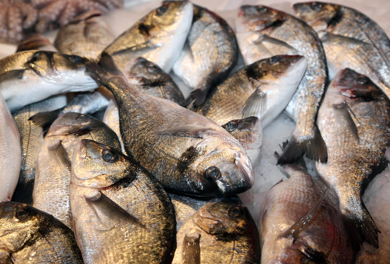 Bream caught fresh in the Mediterranean Sea at the fish market. Great bream caught fresh in the Mediterranean Sea on sale in fish market royalty free stock photography