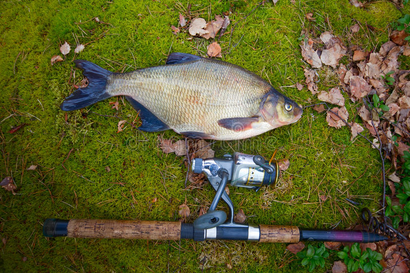 Bream from the far lake stock images