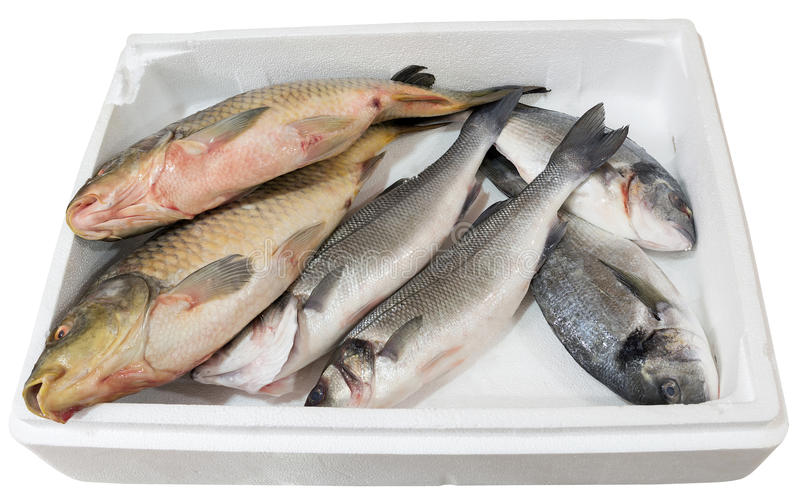 Bream and carp in a tray. Bream and carp fish in a white tray stock photo