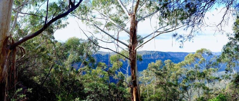 Breathtaking Enchanting Blue Mountains Australia Glimpsed Through Gum Trees. Distant Views of the Blue Mountains in perfect weather glimpsed through Eucalyptus stock photography