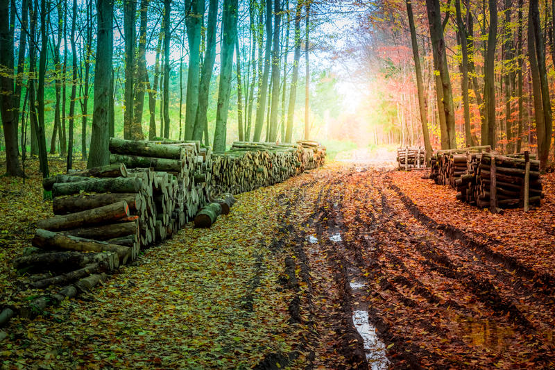 Breathtaking forest in the fall in poland stock photo image of download breathtaking forest in the fall in poland stock photo image of color breathtaking publicscrutiny Gallery