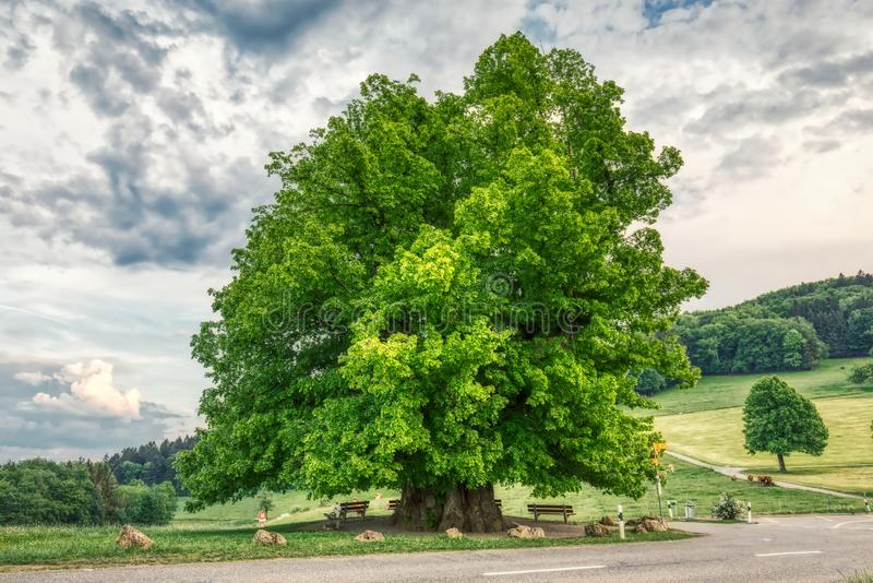 Breathtaking HDR shot of an old linden tree under spectacular sky in linn. Aargau in switzerland royalty free stock photography