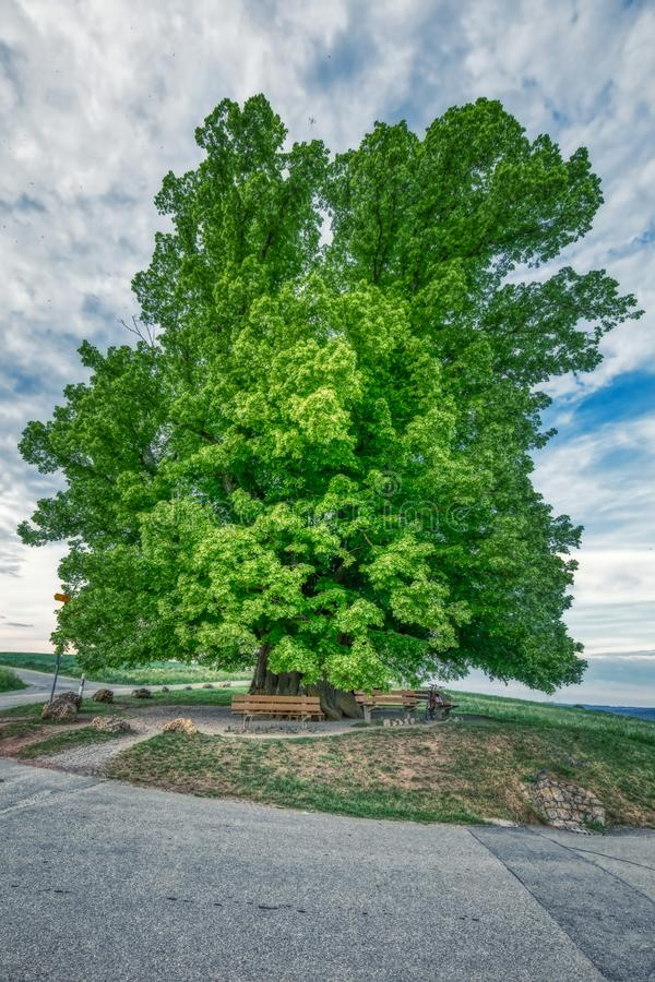 Breathtaking HDR shot of an old linden tree under spectacular sky in linn. Aargau in switzerland stock photography