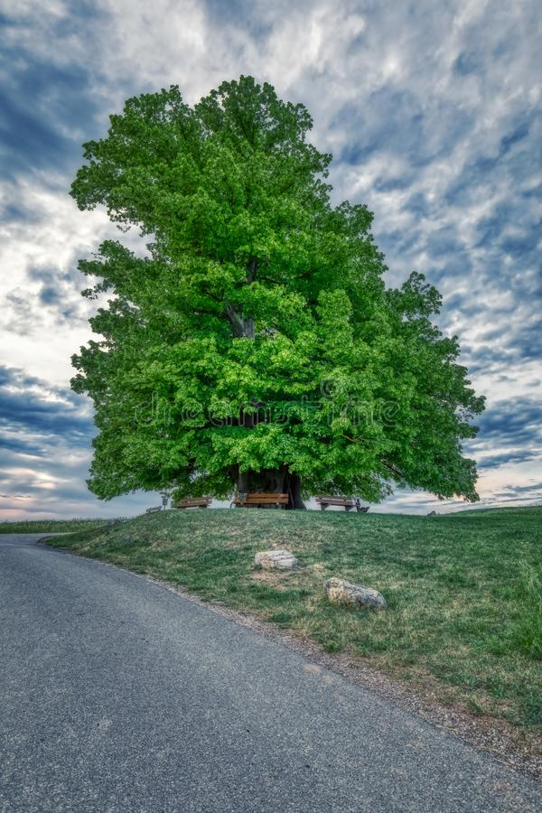 Breathtaking HDR shot of an old linden tree under spectacular sky in linn. Aargau in switzerland royalty free stock photos