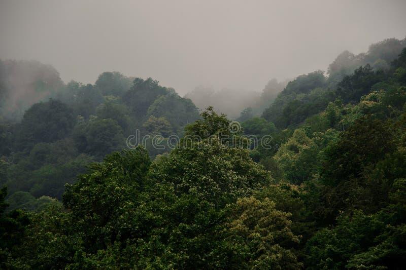 Breathtaking krajobraz zielony drzewo las zakrywający mgłą obrazy stock