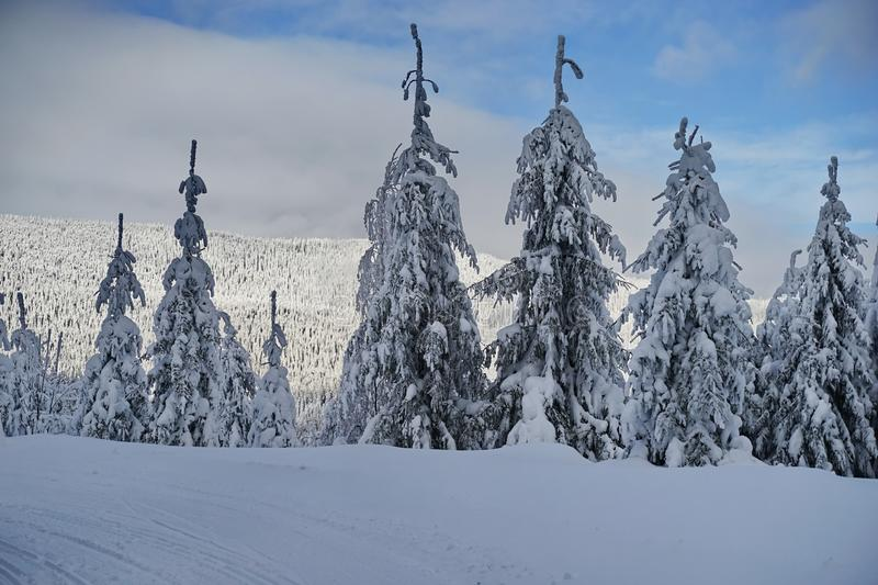 Mountains winter pine tree forest landscape 9 stock photos