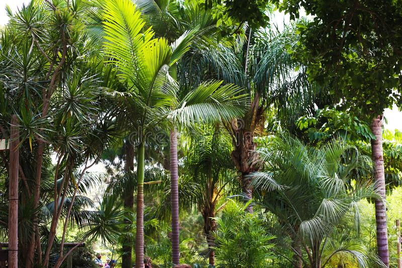 A breathtaking natural photo of green palms and high plants royalty free stock photography