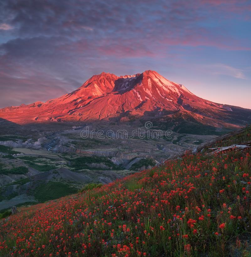 The breathtaking views of the volcano and amazing valley of flowers. Harry`s Ridge Trail. Mount St Helens National Park. USA stock photography