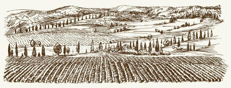Bred sikt av vingården Vingårdlandskappanorama vektor illustrationer