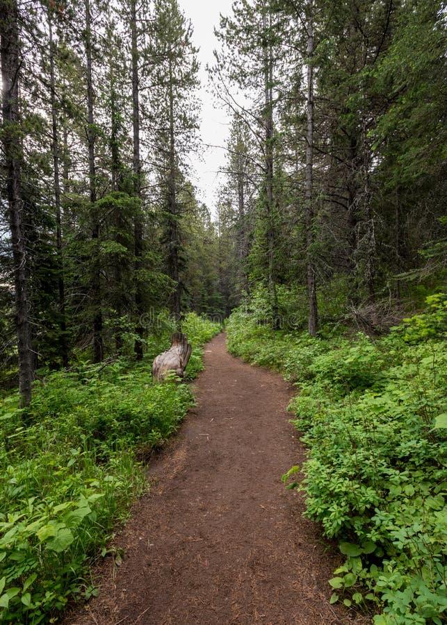 Bred slinga i Montana royaltyfri fotografi