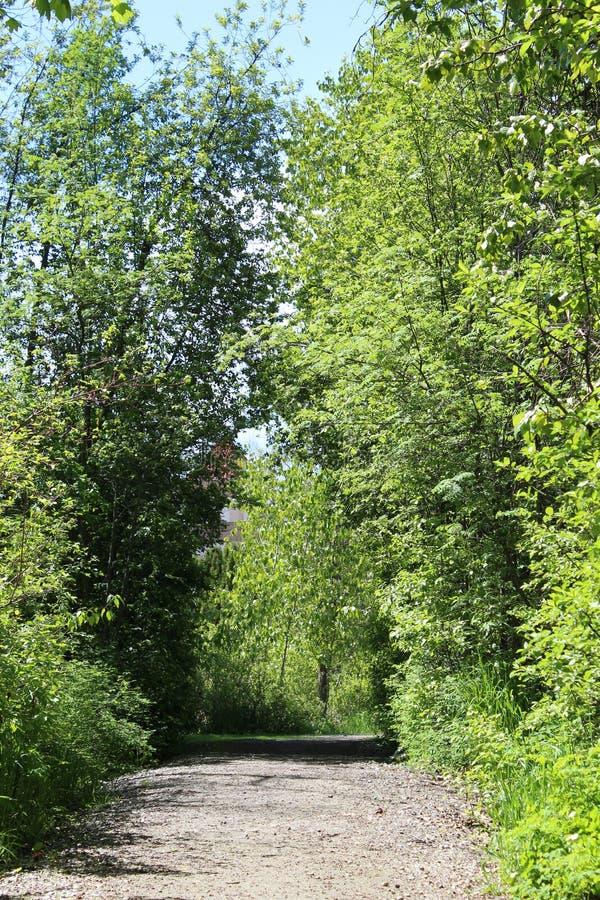 Bred slinga till och med frodig skog arkivbild