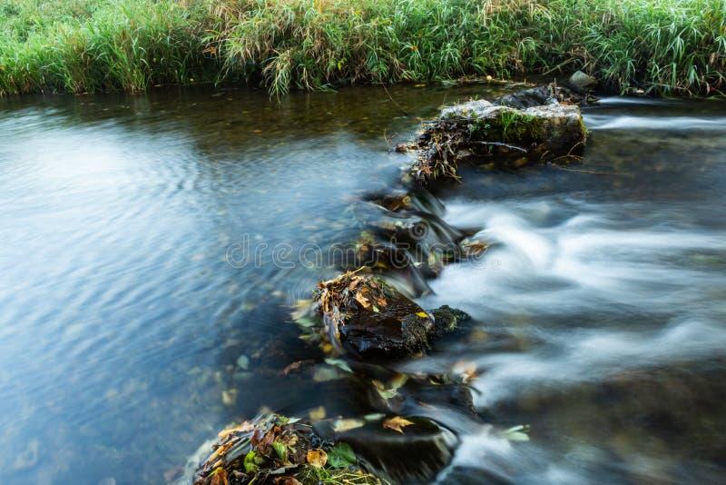 Bred vinkelsikt av ett muskegdamm med dike-vatten i skuggan av träd på en sommardag: överflöd av filialer, växter arkivfoto