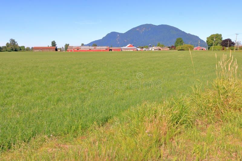 Breda öppna Fraser Valley Farm Landscape arkivbilder