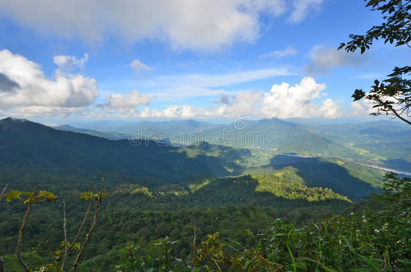 Brede groene bos en waaier in zonlicht stock afbeeldingen