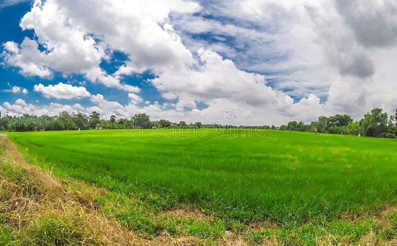 Brede hoekmening van groen padieveld met dramatische bewolkte hemel bij het plattelandsgebied van Thailand royalty-vrije stock fotografie