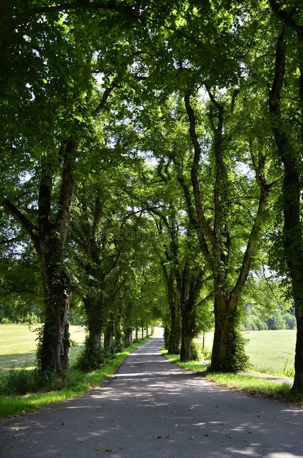 Brede rijweg met mooi aangelegd landschap oudste bomen royalty-vrije stock foto