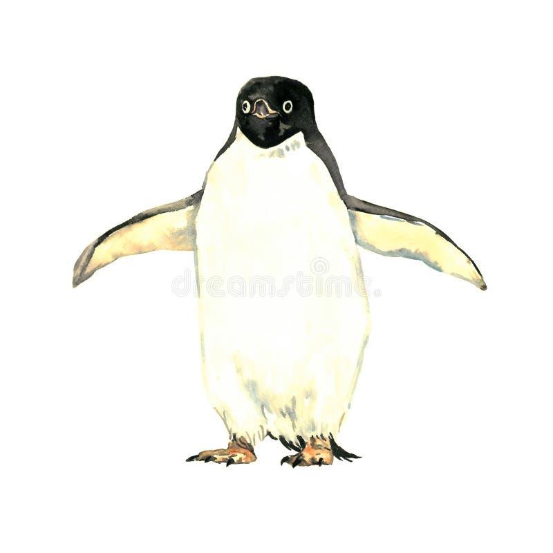 Brede vleugels houden en pinguïn die, vooraanzicht bevinden zich stock illustratie