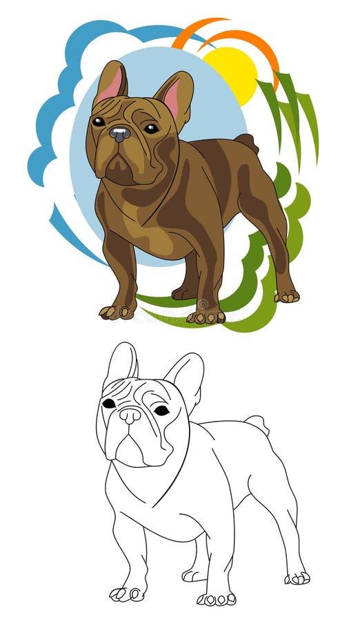 The breed of dog French Bulldog stock image