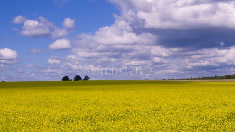Breed open platteland royalty-vrije stock foto