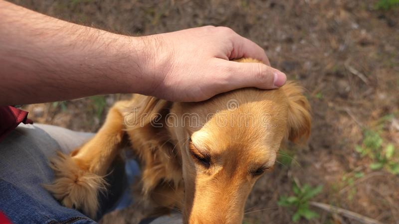 Breeder is petting his beloved dog. Walk with your pet. Happy dog with the owner. A man hand caresses a dog with his. Breeder is petting his beloved dog. Walk stock photo