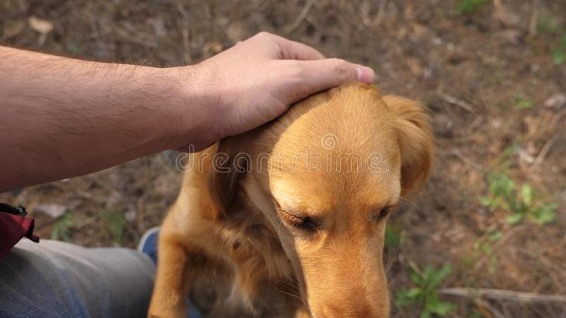 Breeder is petting his beloved dog. Walk with your pet. Happy dog with the owner. A man hand caresses a dog with his. Breeder is petting his beloved dog. Walk royalty free stock photography