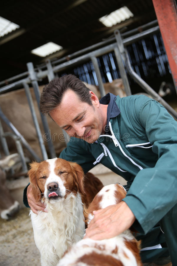 Breeder petting hunting dogs royalty free stock images
