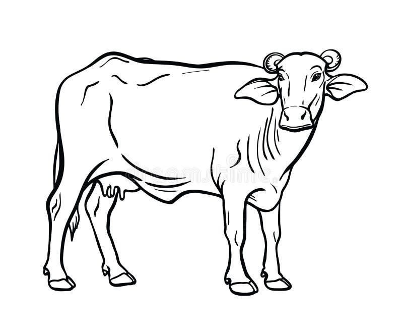 Animal Husbandry Stock Illustrations 5 605 Animal Husbandry Stock Illustrations Vectors Clipart Dreamstime