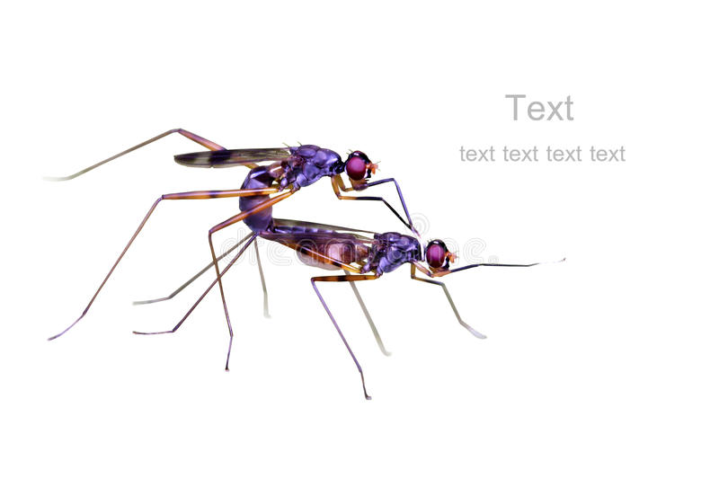 Download Breeding time of bugs stock photo. Image of mating, close - 23797420
