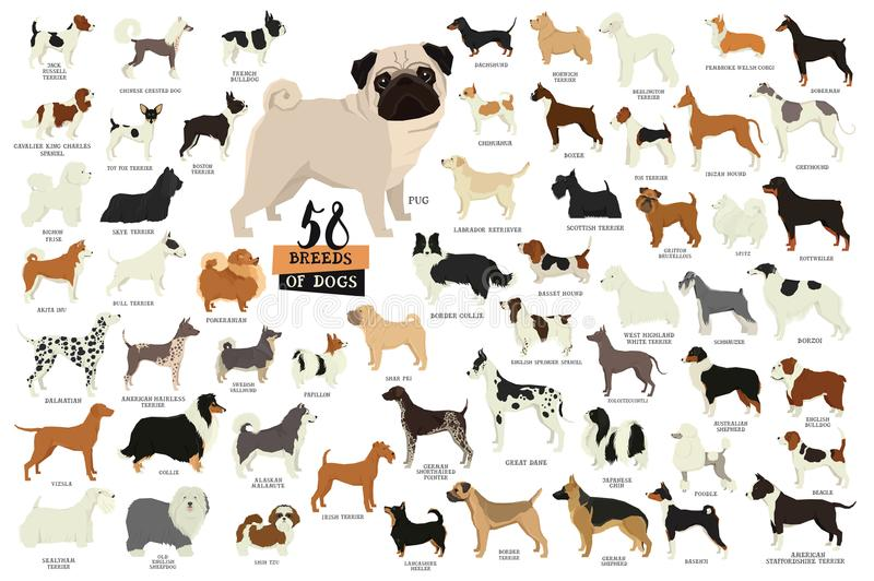 58 Breeds of dogs Isolated objects. Set stock illustration