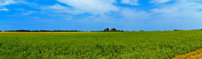 Breite Ansicht der panoramischen Landschaft mit Bäumen hinten Ländlicher Sommer lizenzfreies stockfoto