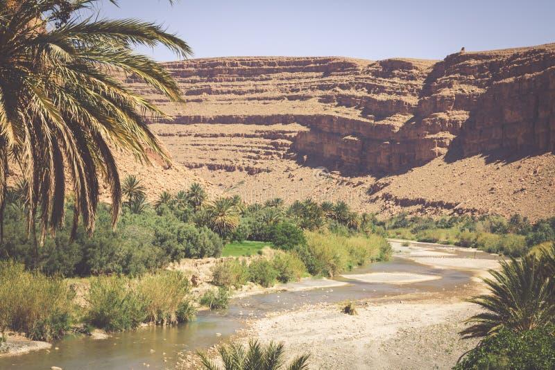 Breite Ansicht der Schlucht und der bebauten Felder und der Palmen in Errachidi stockfotografie