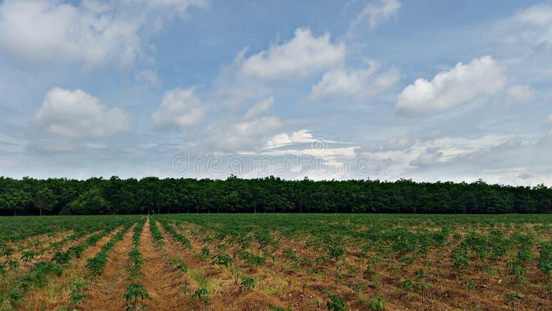 Breite Gummibaum-Plantagenlandschaft stockbilder