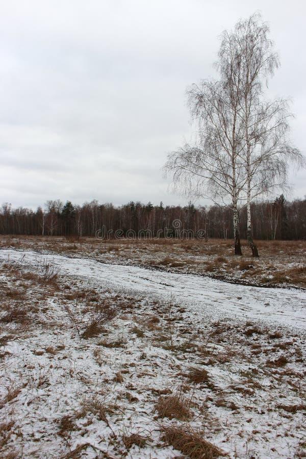 Breite Schneewiese mit Straße und zwei Birken am bewölkten Tag Winterfeld mit Wald und gefrorenen Bäumen Russland, UralJanuary, T stockfotos