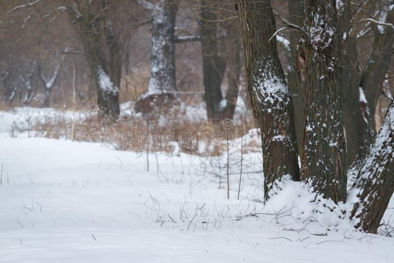 Breite Schneewiese mit Straße und zwei Eichen am bewölkten Tag Winterfeld mit Wald und gefrorenen Bäumen Russland, UralJanuary, T lizenzfreie stockfotografie