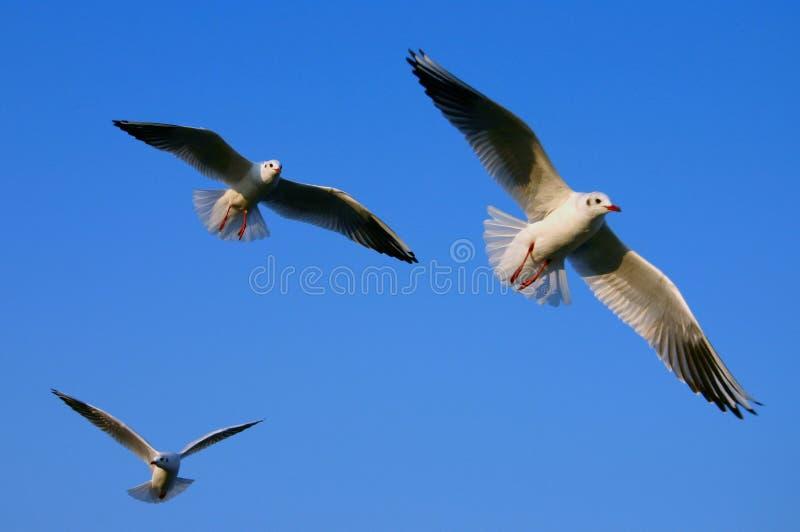 Breiten Sie Ihre Flügel aus lizenzfreie stockfotos