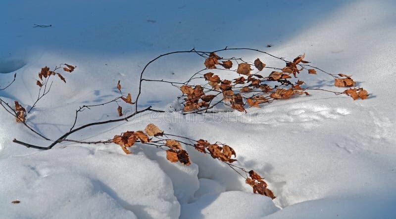 Breiten Sie sich auf einen Schnee aus. stockbilder