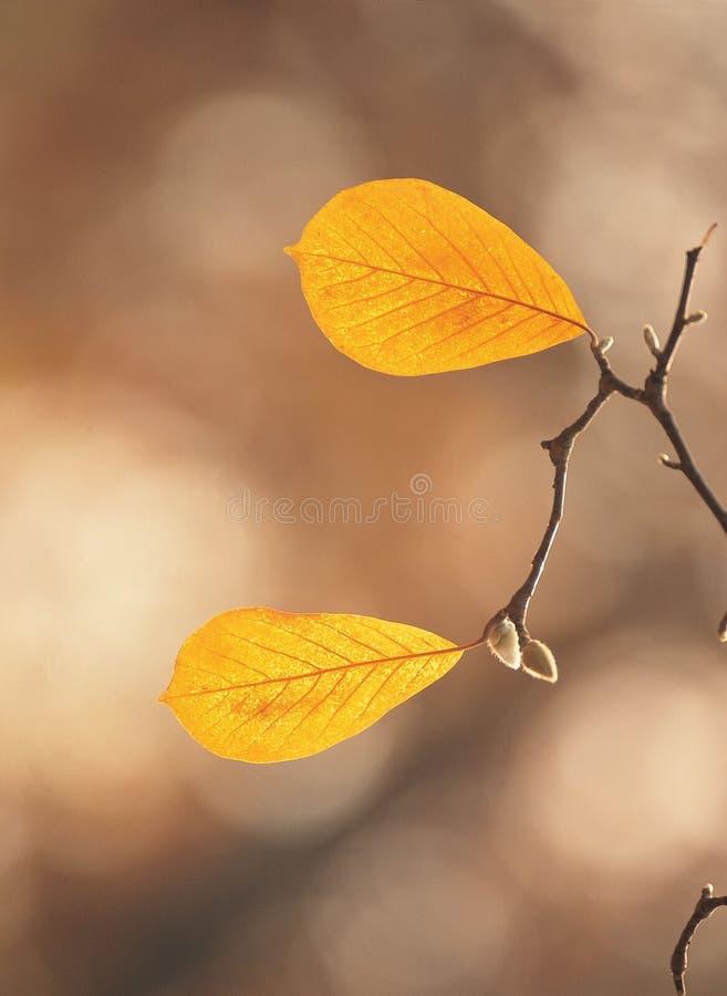 Breiten Sie sich mit Blättern aus stockfoto