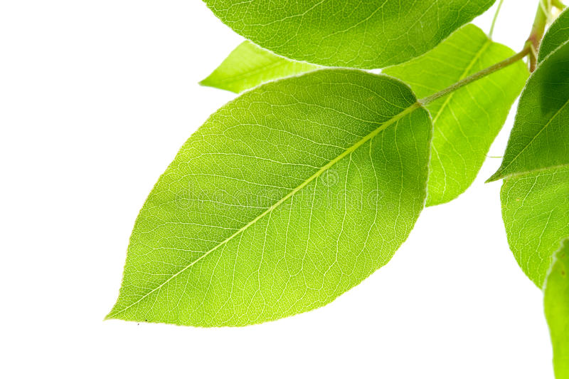 Breiten Sie sich mit grünen Blättern aus lizenzfreies stockfoto