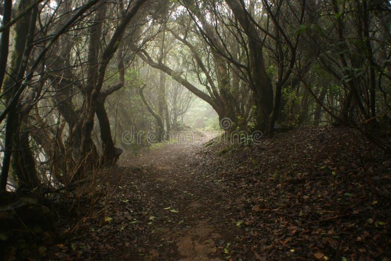 Breiter Erdweg in den Wald stockbilder